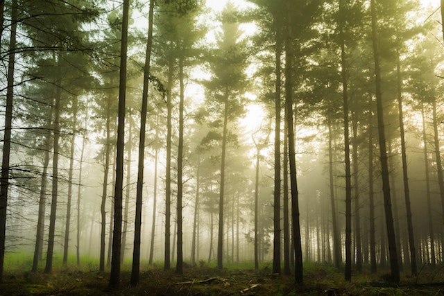 Why Going Green Is Important For All Businesses